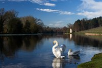 Swan Lake' by Graham Dash, from 'Words in Focus', 2016