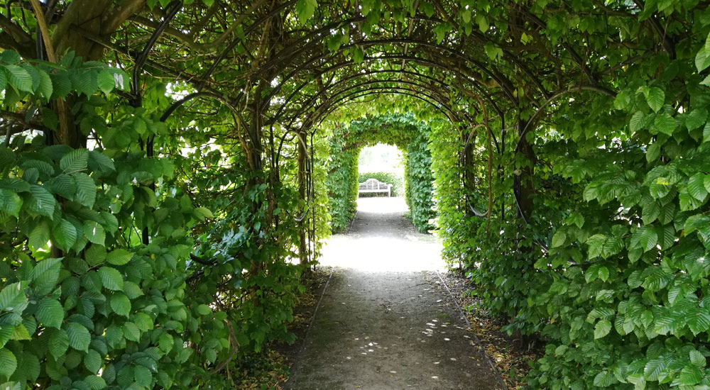Inside of the luscious green garden tunnel at Leatherhead Register Office.