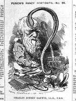 Punch cartoon mocking Charles Darwin, 1881
