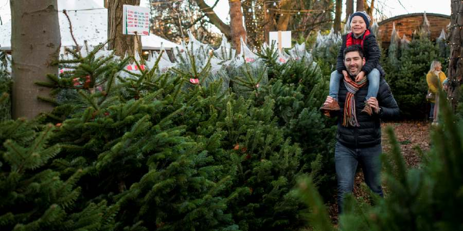 Donate £3 to plant a tree this Christmas