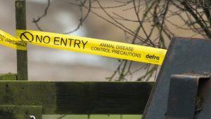 Animal disease no entry yellow tape