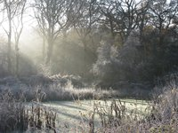Frosty Morning' by Colin Kemp, from 'Words in Focus', 2016