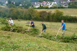 Group of people raking cut grass in a field
