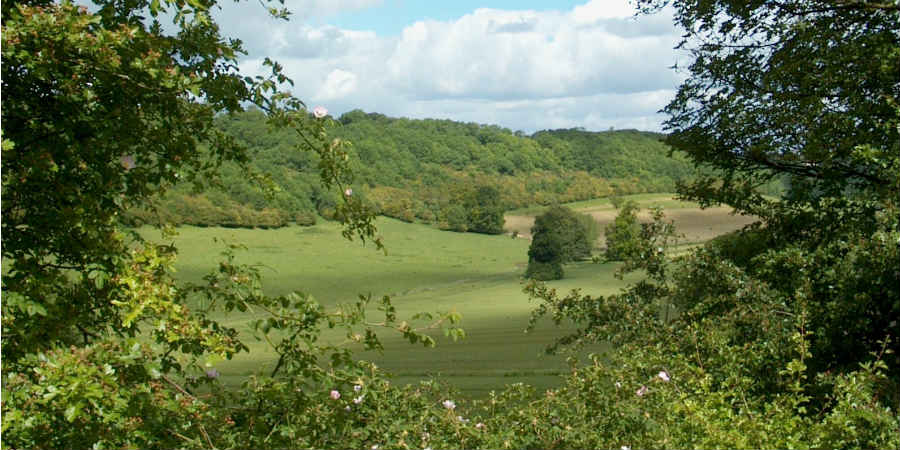 Image of trees and countryside