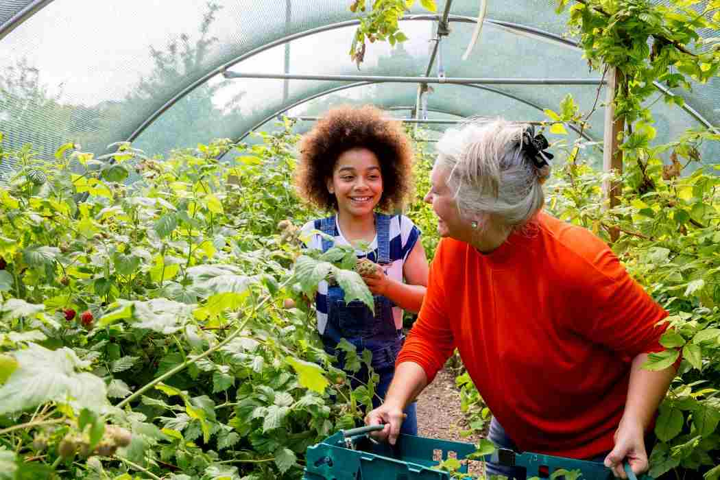 Old woman and young girl in greenhouse gardening together