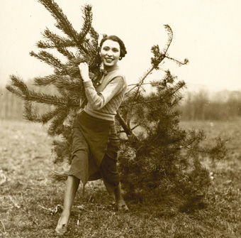 Bringing home the Tree'. Christmas tree harvest at Goldsworth Nurseries, Woking, c.1930. (Photograph by Photopress of Fleet Street). Surrey History Centre reference: 7562/7/2 (5). Reproduced by kind permission of Mrs Shirley Slocock.