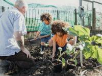 Three people in a garden planting veg