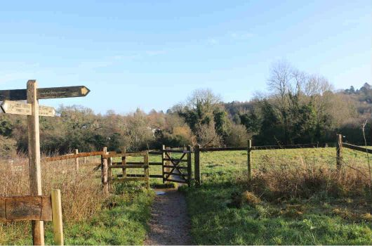 Wooden signpost in Surrey countryside